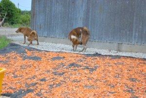 Gambar di atas menjadi finale kepada industri geragau yang aku lihat!  Lihatlah kelibat sang anjing di kiri gambar yang sengaja kencing hanya  beberapa ... cc53cb39db