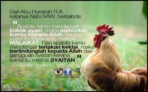 Doa makbul ketika ayam berkokok